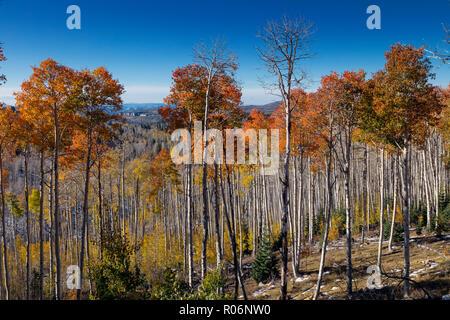 L'évolution des montagnes du sud de l'Utah - Aspen Photo Stock