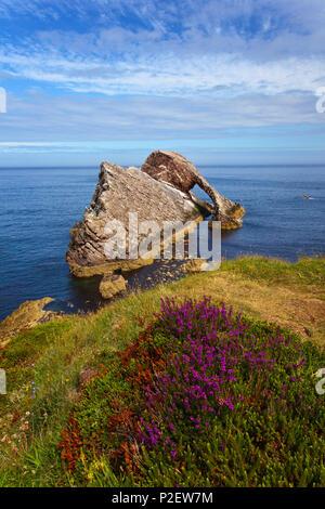 Fiddle Bow Rock, Port Knock, oiseaux, Rock, Island, Coast, Ecosse Photo Stock