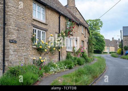 Roses jaunes sur un chalet dans le village de Churchill, Cotswolds, Oxfordshire, Angleterre Photo Stock