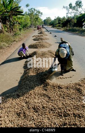 Le séchage de l'ARACHIDE SUR LA ROUTE TAMILNADU Photo Stock