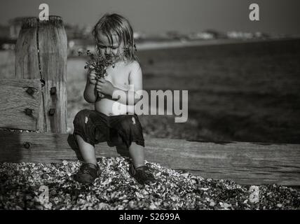 Enfant tenant la lavande Photo Stock