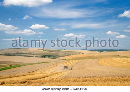 Vue paysage de la récolte de blé d'été de coupe de moissonneuse-batteuse et de grandes cultures agricoles sur ciel bleu Photo Stock