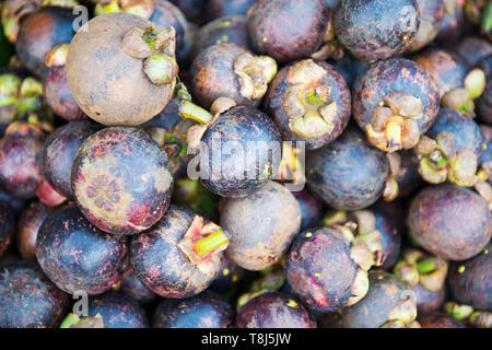 Close-up of fruits mangoustan, Vietnam Photo Stock