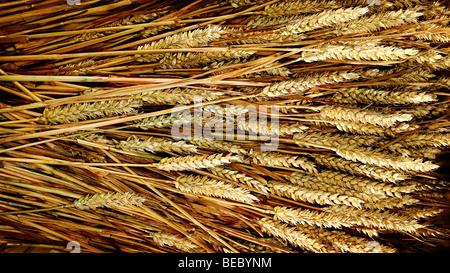 grains de blé Photo Stock