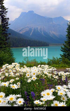 Le lac Emerald, avec des fleurs d'été, Banff, Rocheuses canadiennes. Voir soumis par la nature légèrement Photo Stock