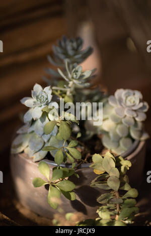 Close-up de plantes en pot Photo Stock