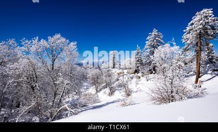 Saupoudré de neige dans les montagnes de San Bernardino, au-dessus du lac Arrowhead, forêt nationale de San Bernardino, California USA Photo Stock