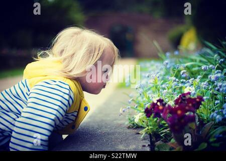 L'odeur de fleurs Photo Stock