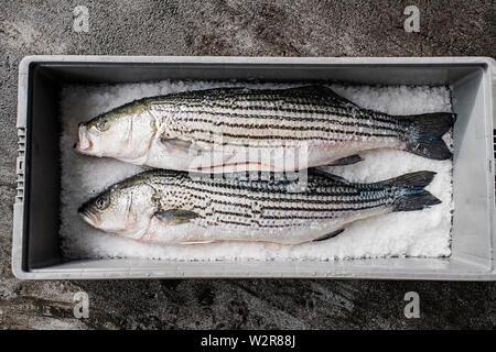 Deux poissons frais sur un marché aux poissons sur la glace de décrochage Photo Stock