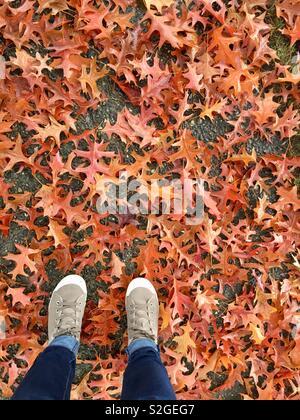 Automne à Seattle Photo Stock