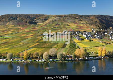 Vignes en automne, près de Beilstein, Rhénanie-Palatinat, Allemagne, Europe Photo Stock