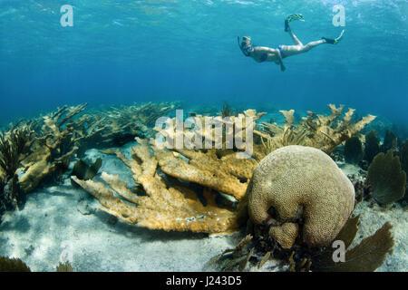 Snorkeler flotte au-dessus de coraux durs sur le terrain. Photo Stock