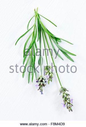 Avec des fleurs de lavande Photo Stock