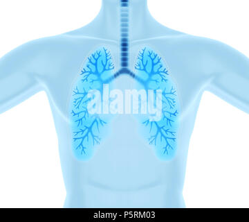 Propres et des poumons sains.3D illustration Photo Stock