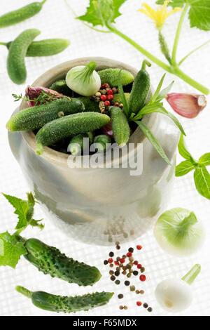 Bocal de cornichons avec des herbes Photo Stock