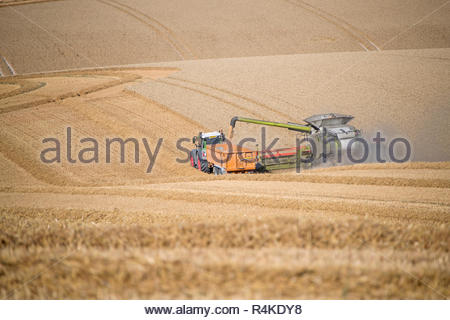 Vue de la récolte de blé d'été de coupe de moissonneuse-batteuse et le tracteur sur les grandes cultures agricoles sur remorque Photo Stock