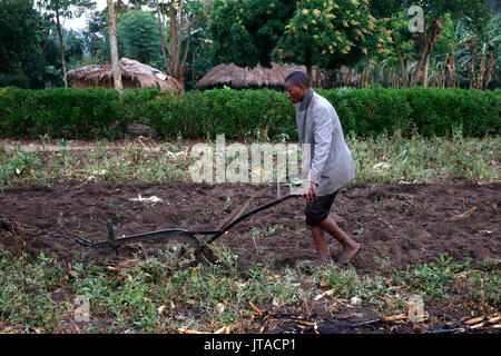 Le labour, Kigumba, Ouganda, Afrique du Sud Photo Stock