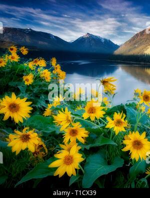 Wallowa Lake et de montagnes avec Balsomroot. Oregon Photo Stock