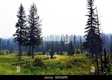 Canadian wildnerness dans le parc Wells Gray, en Colombie-Britannique, au Canada. Photo Stock