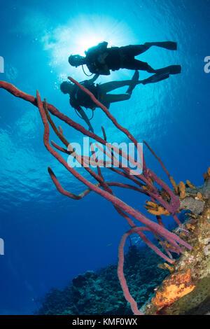 Les plongeurs se profilent derrière une corde d'une éponge. Photo Stock
