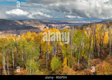 La couleur de l'automne - Manti-La Sal National Forest, Utah Photo Stock