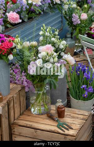 Fleurs Freddies affichage à Chatsworth RHS Flower Show 2019. Chatsworth, Derbyshire, Royaume-Uni Photo Stock