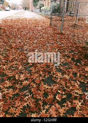 Tant de feuilles Photo Stock