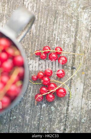 Baies de groseille rouge fraîchement cueillies sur table en bois. Détail des récoltes. Photo Stock