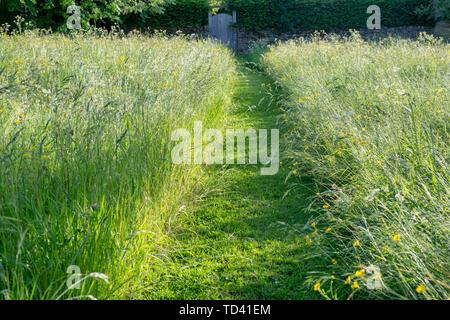 Chemin à travers la longue herbe tondue en fin de soirée la lumière. Wyck Rissington, Cotswolds, Gloucestershire, Angleterre Photo Stock