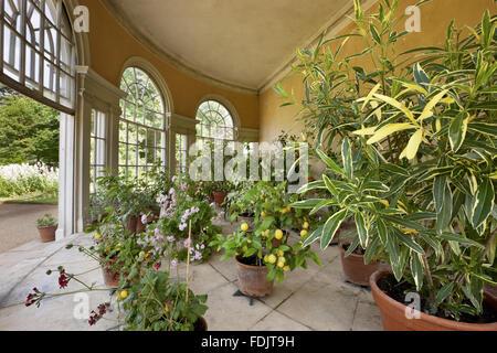 L'intérieur de la maison du jardin semi-circulaire dans le plaisir motif à Osterley, Middlesex. La Photo Stock