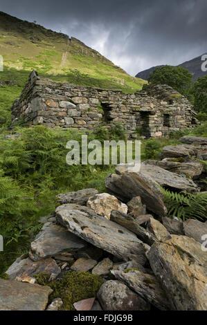 Les ruines d'un bâtiment de la mine avec Clogwyn Brith au-delà avec l'encoche de pente encore Photo Stock
