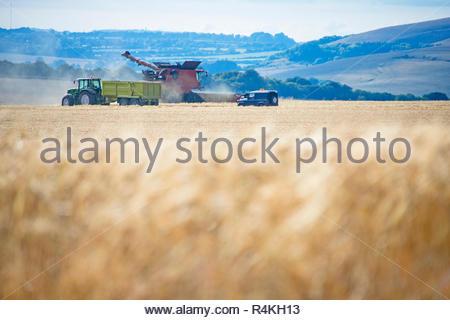 Champ d'orge d'été avec la récolte à la moissonneuse-batteuse et le tracteur remorque sur farm Photo Stock