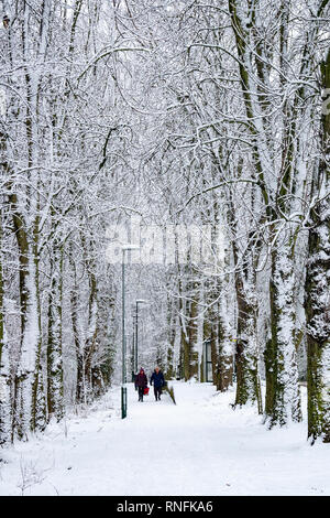 L'Avenue d'arbres à Hutton, Guisborough après une chute de neige Photo Stock
