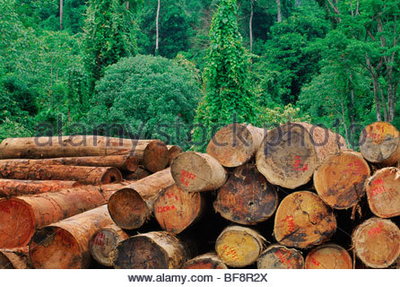 Logging in lowland rainforest, Sabah, Bornéo Photo Stock