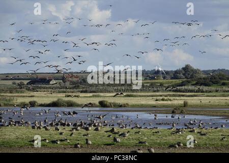 Vol d'oies à pieds roses en marais à Burnham Deepdale vers Overy Mill Photo Stock