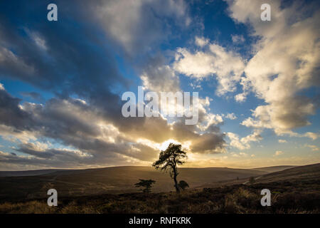 Au coucher du soleil de Lone Pine, Commondale, North York Moors Photo Stock