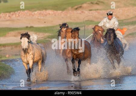 La Chine, la Mongolie intérieure, Province de Hebei, Zhangjiakou, Bashang herbage, traditionnellement vêtus avec des chevaux mongols s'exécutant dans un groupe dans l'eau Photo Stock