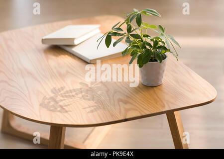 Plante en pot sur la table Photo Stock