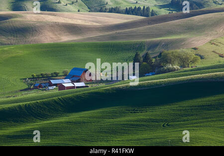 USA, l'État de Washington, les champs de blé Palouse Photo Stock