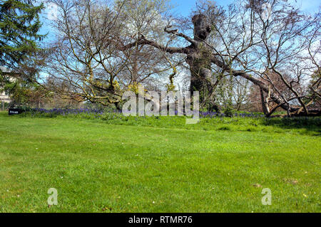 Kedleston Hall, Kedleston, Derbyshire, Royaume-Uni Photo Stock
