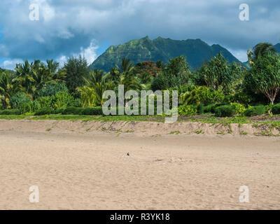 La baie de Hanalei, Hanalei, Kauai, Hawaii, la plage et les montagnes Photo Stock