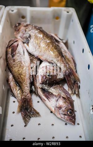 Poisson frais dans un marché aux poissons, wc séparés. Photo Stock