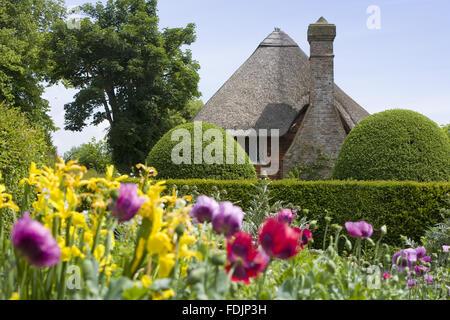 Colorful Poppies in the cottage garden à 1 156 Km Maison du clergé, xive siècle, Wealden hall house Photo Stock