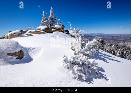 Le givre blanc sur les pins au-dessus de Lake Arrowhead dans les montagnes de San Bernardino, forêt nationale de San Bernardino, California USA Photo Stock