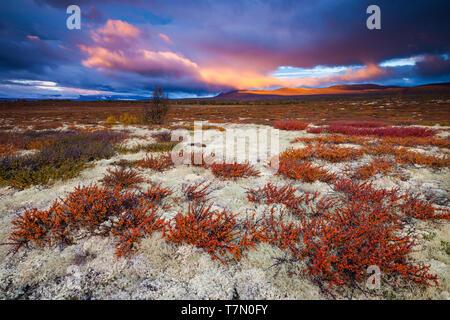 Beau matin d'automne à Fokstumyra réserve naturelle à Dovre, la Norvège. Photo Stock