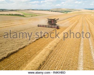 Vue de la récolte de blé d'été de coupe de moissonneuse-batteuse à la ferme de grandes cultures Photo Stock