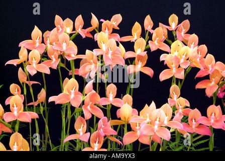 Vive lueur lumineuse jour fleur macro close up tête veine pétale jaune orange rose manette couleur couleur England UK United Photo Stock