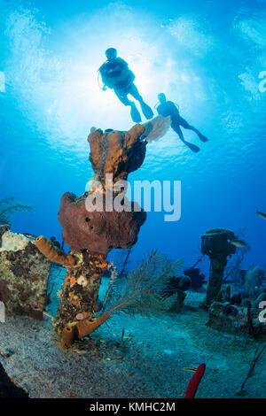 Plongeurs sur l'épave de l'oro verde, grand cayman Photo Stock