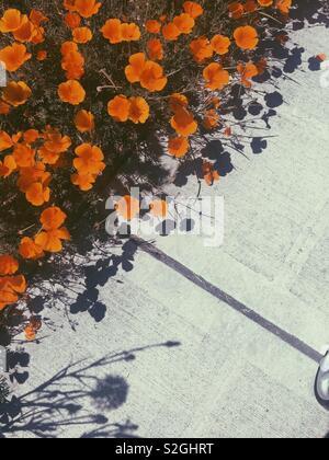 Fleurs orange Photo Stock