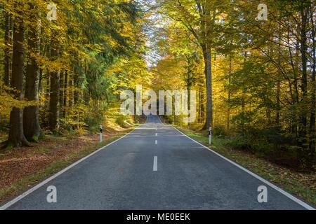Route forestière en automne à Spiegelau dans le Parc National de la Forêt bavaroise en Bavière, Allemagne Photo Stock